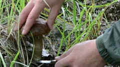 Hand knife pick red cap scaber stalk  mushroom grow green grass Stock Footage