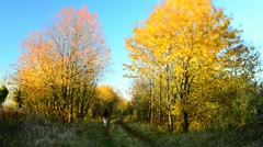 Man walking dog along path through trees in the autumn Stock Footage