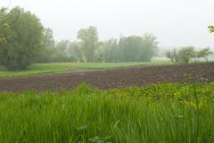 Stock Photo of dewy grass