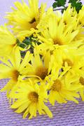 Yellow daisies Stock Photos