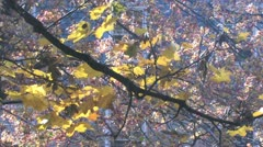Beatiful Autumn scenery in the park - stock footage