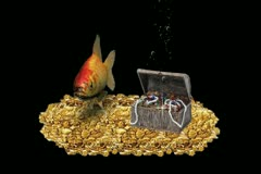 GOLD FISH GOLD - stock footage