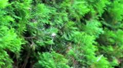 Spider in Web Stock Footage