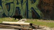 Detroit Wild Dog Stock Footage