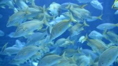 Large Aquarium Fish Tank Stock Footage