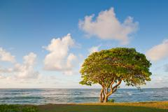 Kapa'a Tree Sunrise.jpg Stock Photos