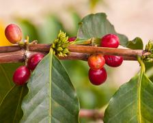 Coffee Beans.jpg Stock Photos