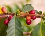 Stock Photo of Coffee Beans.jpg
