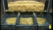 Pasta in factory Stock Footage