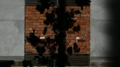 Tree and wall Stock Footage