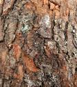 Stock Photo of wood background