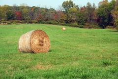 hay rolls in a green field - stock photo