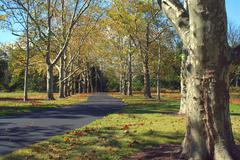 Path lined with sycamore trees Stock Photos