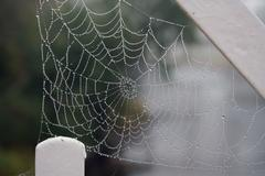 spider web with dew - stock photo