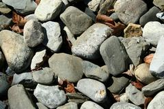Rocks and dead leaves background Stock Photos
