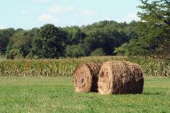 hay rolls - stock photo