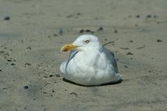 seagull - stock photo