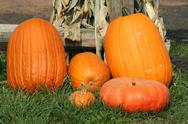 Stock Photo of pumkins