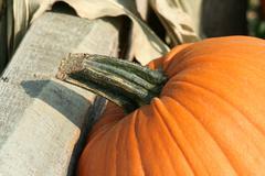 pumkin close up - stock photo