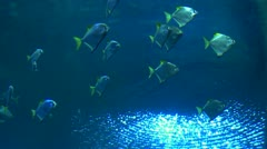 stock footage underwater shootings shark and fish - stock footage
