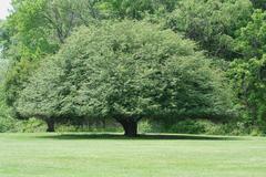 Rounded tree - stock photo