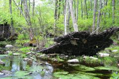 Fallen tree in swamp Stock Photos