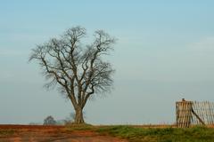 Large tree Stock Photos