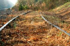 abandoned railroad tracks - stock photo