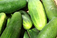 bunch of cucumbers - stock photo