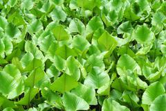 Green swamp plants background Stock Photos