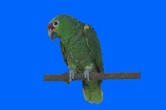 Green bird 2 Stock Footage