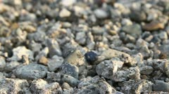 Rock ground Stock Footage