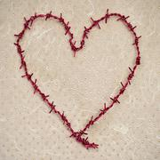 heart-shaped barbed wire - stock photo