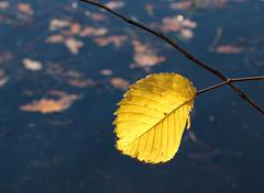 Single autumn leaf Stock Photos