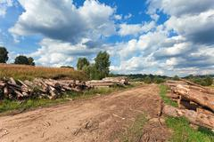 summer landscape with a country road and felled trees - stock photo