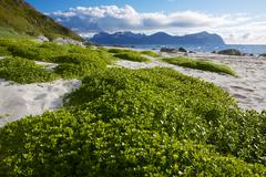 summer on lofoten - stock photo