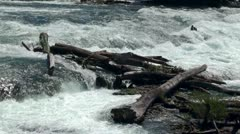 "River drift wood at the Whitewater. Fallen trees into a river (""log jam"") Stock Footage"