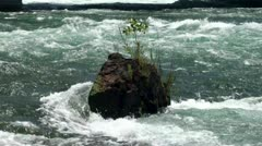 Rocky breed ledge with moss & grass in the middle of a river. Stock Footage