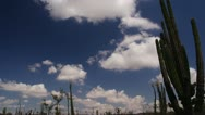 Stock Video Footage of Baja Mexico Desert large cactus with clouds timelapse