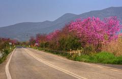 street in greece - stock photo