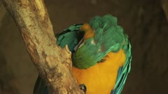 Close Up Of Parrot Stock Footage