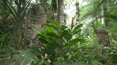 Mayan ruins & Spanish ruins dolly shot through bushes # 2 Stock Footage