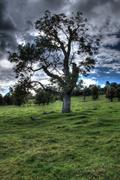 Tree in HDR - stock photo