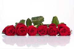 Line of red roses Stock Photos