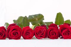 Line of red roses - stock photo