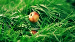 Apples falling on the wet grass, slow motion shot at 480fps Stock Footage
