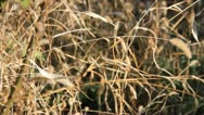Stock Video Footage of Silent rustle dry grass in autumn