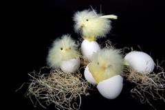 Baby chicks with eggs Stock Photos