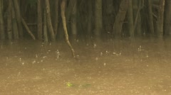 Rain Falling On the Amazon River Forest in the Background Stock Footage