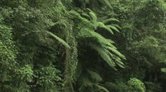 Panoramic View Of The Lush Tropical Plants In The Amazon Rain Forest - stock footage